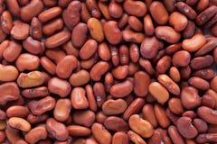 Sesbania grandiflora seed or agati Stock Photo