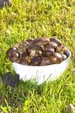Seson auf Pilzen Stockfoto