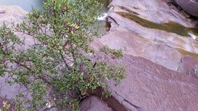 Sespe berg Royaltyfria Bilder