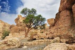 Sesriem峡谷,纳米比亚 库存照片