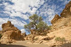 Sesriem kanjon, Namibia Arkivfoto