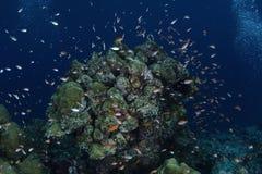 Sessão subaquática Foto de Stock