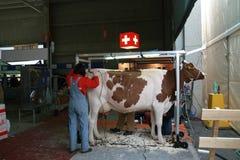 sessantacinquesimo Mucche da latte giuste del commercio internazionale Immagini Stock Libere da Diritti
