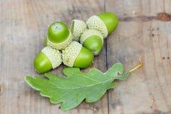 Sessile oak acorn Stock Photo