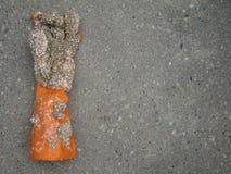 Sessilia sul guanto fuori il mare Fotografie Stock Libere da Diritti
