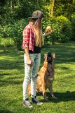 Sessione di addestramento di cani di obbedienza in giardino domestico fotografia stock libera da diritti