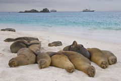 Sesta da praia Fotografia de Stock