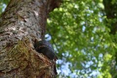Sesta da tarde em uma árvore imagem de stock royalty free
