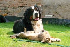 Sesta do cão e gato Imagem de Stock Royalty Free