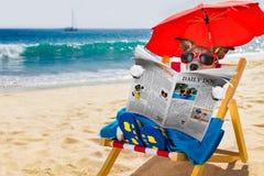 Sesta do cão na cadeira de praia fotografia de stock