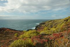 Sesuvium variopinto su Punta Pitt in San Cristobal Island Immagine Stock Libera da Diritti