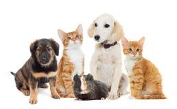 Setów zwierzęta domowe Zdjęcia Royalty Free
