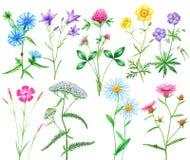 Set łąkowi kwiaty Zdjęcia Royalty Free