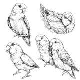 Set śliczne śmieszne lovebird papugi Fotografia Royalty Free
