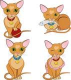 Set śliczni imbirowi koty tła postać z kreskówki zuchwałych ślicznych psów szczęśliwa głowa odizolowywał uśmiechu biel Obrazy Stock