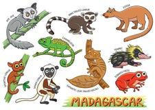 Set Śliczni kreskówek zwierzęta w Madagascar terenach i royalty ilustracja