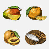 Set świeże owoc, jarski jedzenie, rośliny, rocznika przyglądający koks, mango i tangerine ręki rysować, grawerować, Obrazy Royalty Free