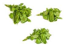 Set Świeży zielony basil opuszcza na białym tle Zdjęcie Stock