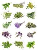 Set świezi ziele na odosobnionym obrazy stock