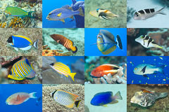 Set of 16 fishes. Set of 16 tropical fishes close-up. Underwater concept royalty free stock photos