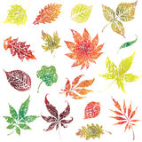 Set 2 of autumn grunge leafs. Thanksgiving Stock Photo