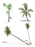 Set of 3d palms. On the white background Stock Photography