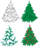 Set of 4 firs. Stock Images