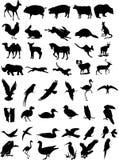 Set of 44 wild animals Stock Photo