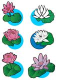 Set of 6 lotus flower Royalty Free Stock Image