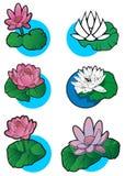 Set of 6 lotus flower. Lotus flower, set of 6 different lotuses, element for design, vector illustration Royalty Free Stock Image