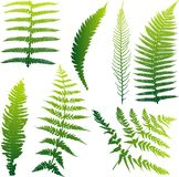 Set of 7 fern illustrations Royalty Free Stock Photo