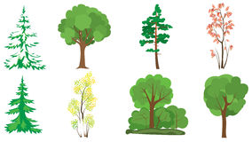 Set of 8 trees - vector Royalty Free Stock Photography