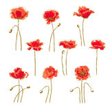 Set of 9 poppy flower Stock Photo