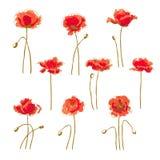Set of 9 poppy flower. Set of 9 hand-drawn poppy flower, isolated on white background Stock Photo