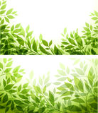 Set - abstract background. With green sheet Stock Image