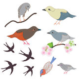 Set of abstract birds and apple flowers Stock Photos
