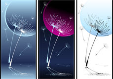 Set Abstract Composition dancing dandelion seeds Stock Photos