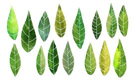 Set of abstract green leaves in watercolor Royalty Free Stock Image