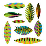Set abstract tropical leaves Royalty Free Stock Photo