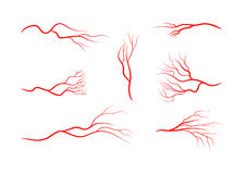 Set of abstract veins, blood vessels, arteries, capillaries. Royalty Free Stock Photo