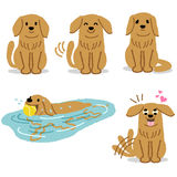 Set of adorable Golden Retriever expression Stock Photography