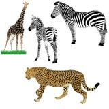 Set of African animals. Zebras, girafe, cheetah vector illustration