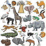 Set of African animals Stock Images