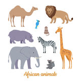 Set of African Animals Flat Design Illustrations. Collection of african animals. Flat design vector. Camel, lion, parrot, monkey, hippo, zebra, elephant, giraffe Royalty Free Stock Images