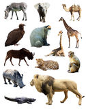 Set of african animals. Isolated over white background Stock Images