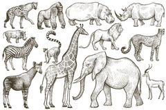 Set of African animals. Royalty Free Stock Photography