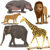 Set With African Animals. On white background Stock Images