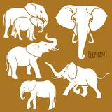 Set of African elephants in various poses. Royalty Free Stock Photography