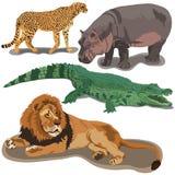 Set of African predators Stock Image
