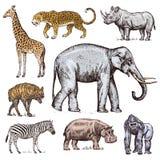 Set afrikanische Tiere Wildes Zebra des Nashorn-Elefant-Giraffen-Nilpferd-Leopard-Hyänenwestgorillas gravierte Hand stock abbildung